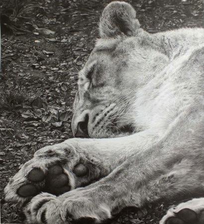 julie-rhodes-SerengetiSlumber