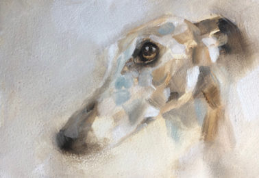 JulieBrunn-WillowtheWhippet