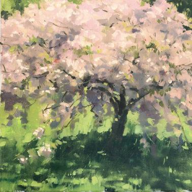 Haidee-Jo-Summers-FloweringCherry