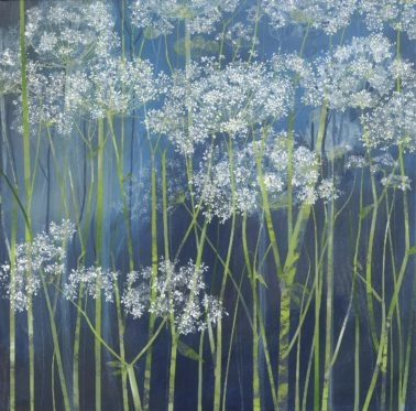 claire_henley-CowParsley