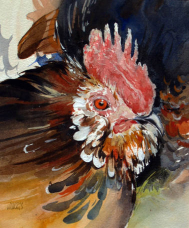 david_morris-Cockerel